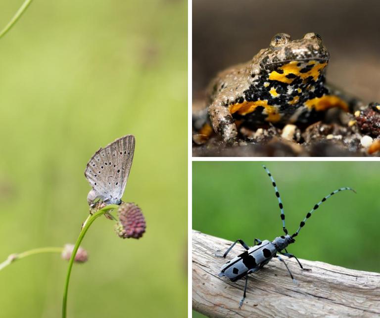 Evropska sredstva za obnovitev in izboljšanje stanja naravnih habitatov ob Muri in na Pohorju